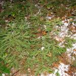certova-skala-silvestr-2006-009